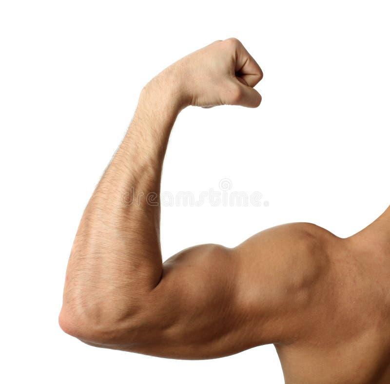 De Bicepsen van de verbuiging stock afbeelding