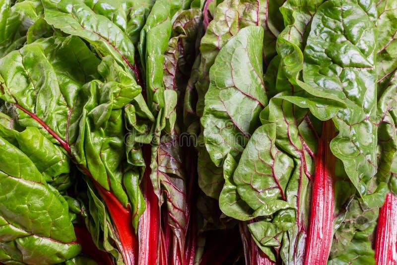 De biet maakt typicaly blad van het voedsel van de bieteninstallatie voor dieetarmen in groen vet stock afbeelding