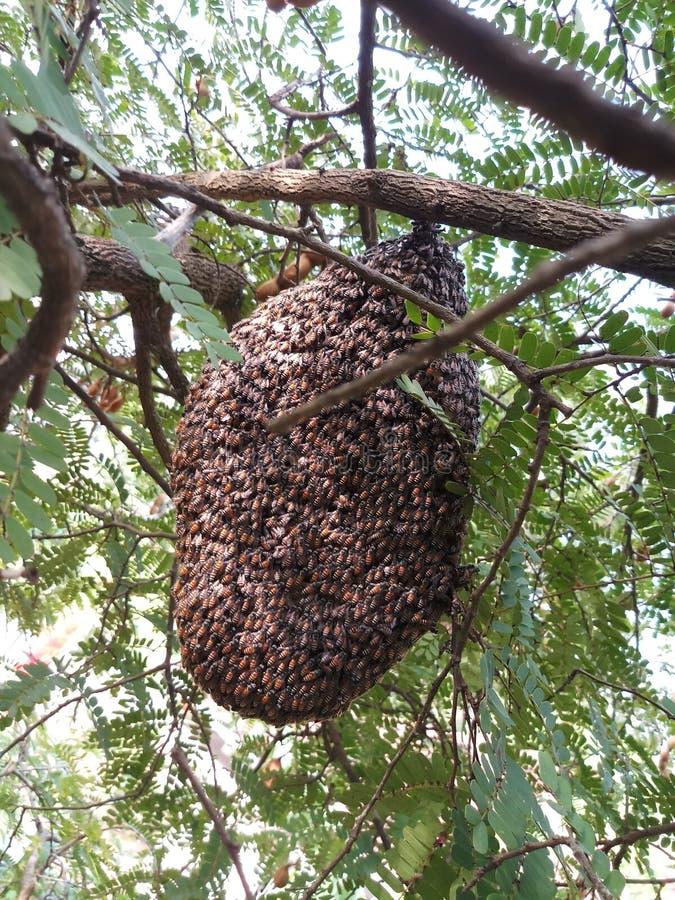 De bij van de honing royalty-vrije stock foto's