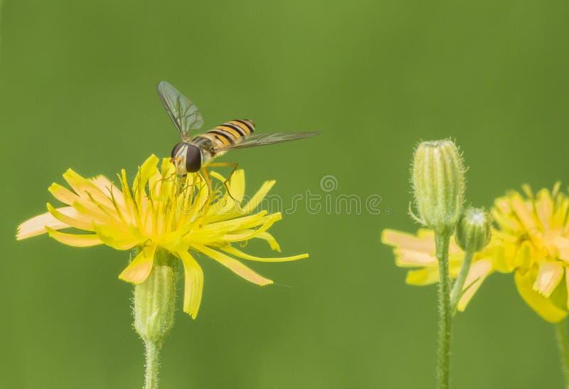 De bijen royalty-vrije stock afbeeldingen