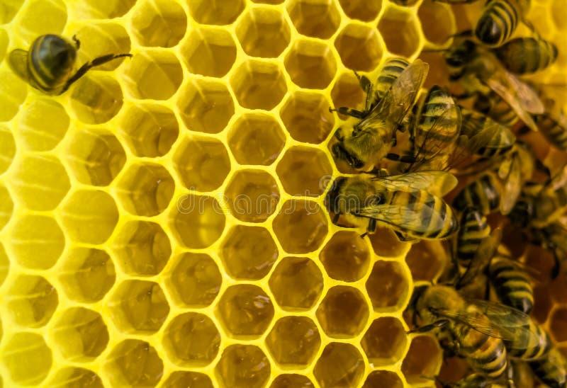 De bijen op het werk royalty-vrije stock foto's