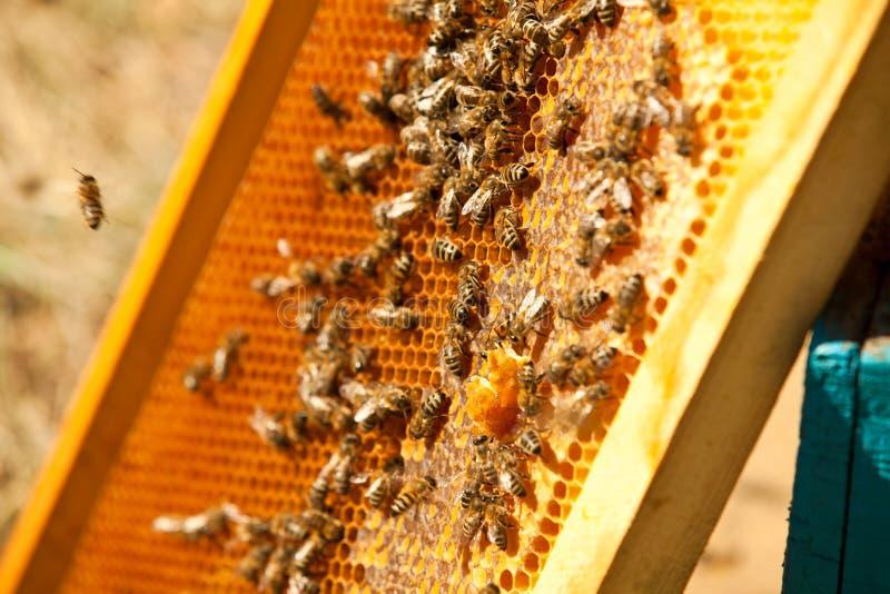 De bijen werken aan een bijenstal stock foto