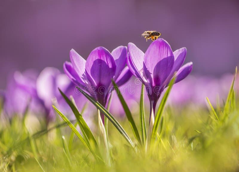 De bijen werken reeds royalty-vrije stock afbeeldingen