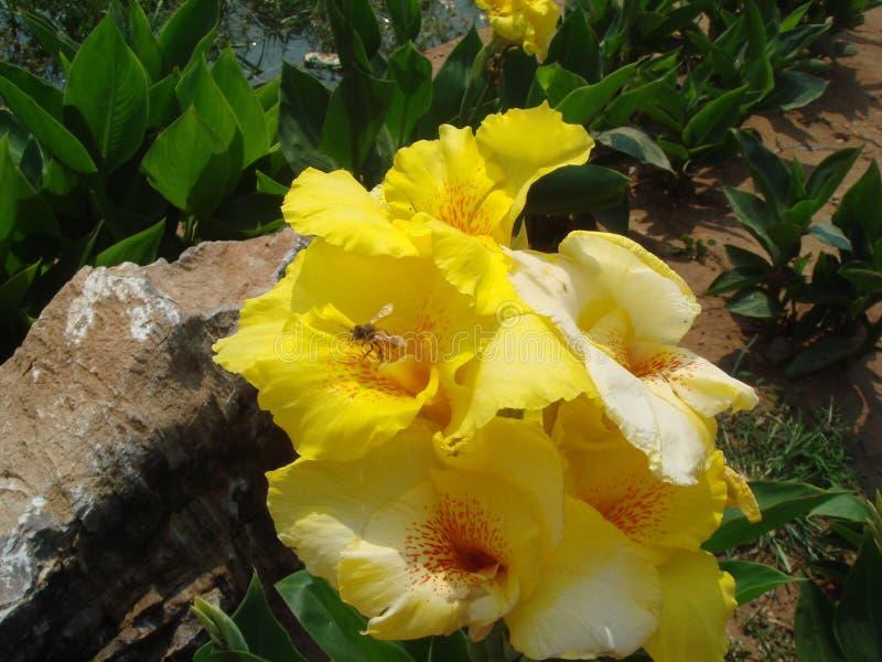 De bijen zijn bezig het verzamelen van nectar royalty-vrije stock foto's