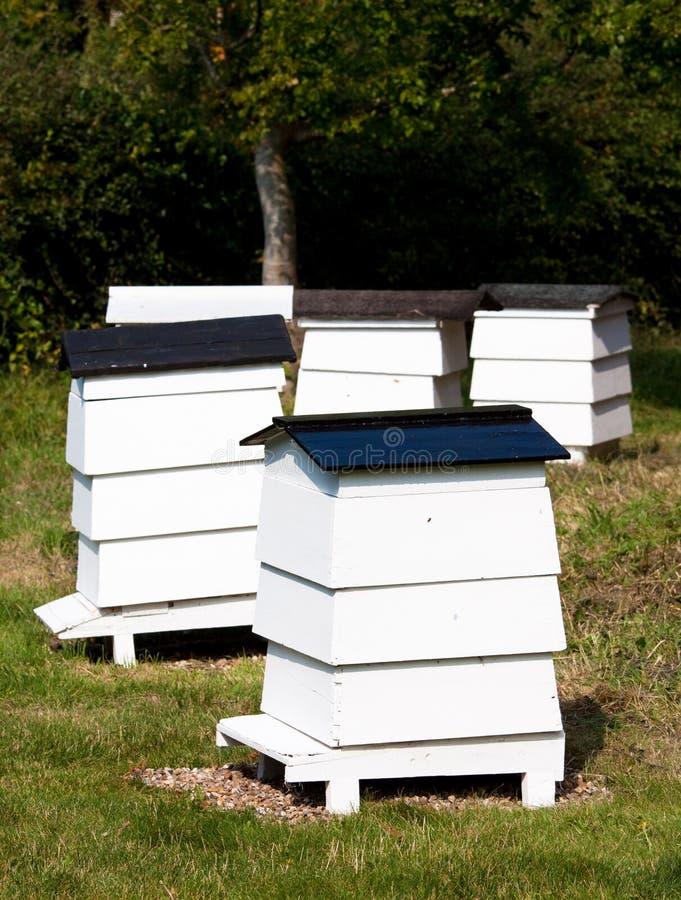 De Bijenkorven van de bij stock fotografie