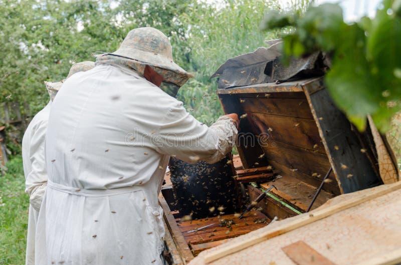 De bijenkorven van het Beekeepersproces met honingbijen stock foto's