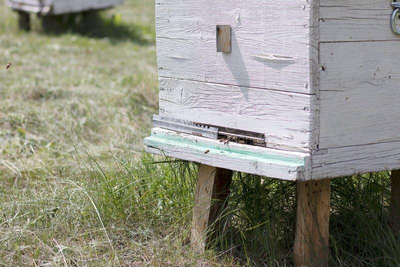 De bijenvlieg in een witte bijenkorf en verzamelt honing Wit huisbij op de bijenstal De ingang aan de bijenkorf Natuurlijke imker stock afbeeldingen