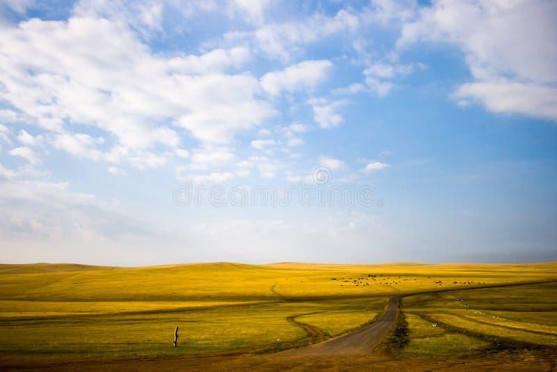 De binnen weide van Mongolië royalty-vrije stock fotografie