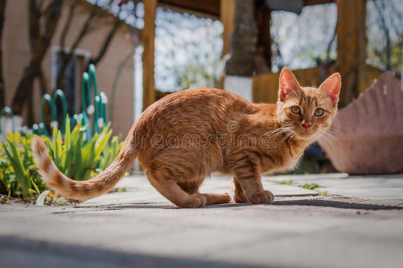 De binnenlandse kat in de werf stock foto