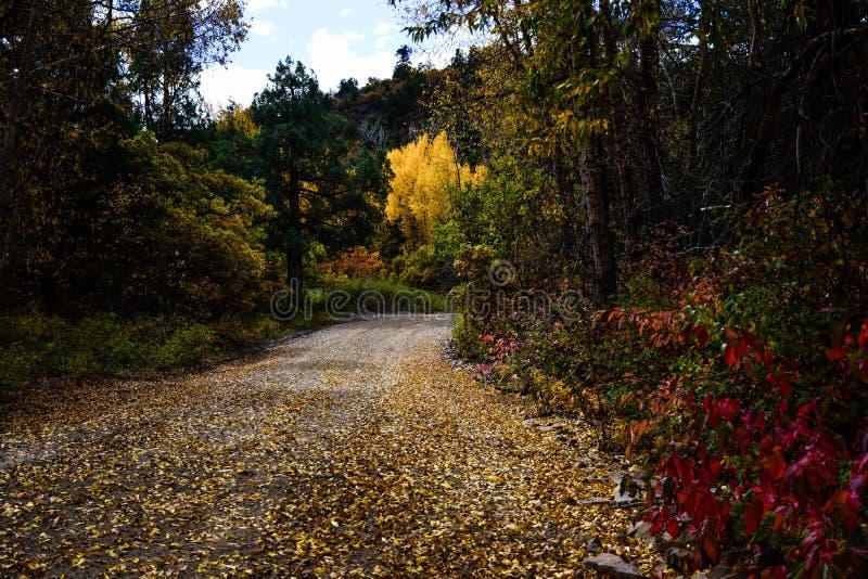 De Binnenweg van Colorado in de Herfst stock foto's