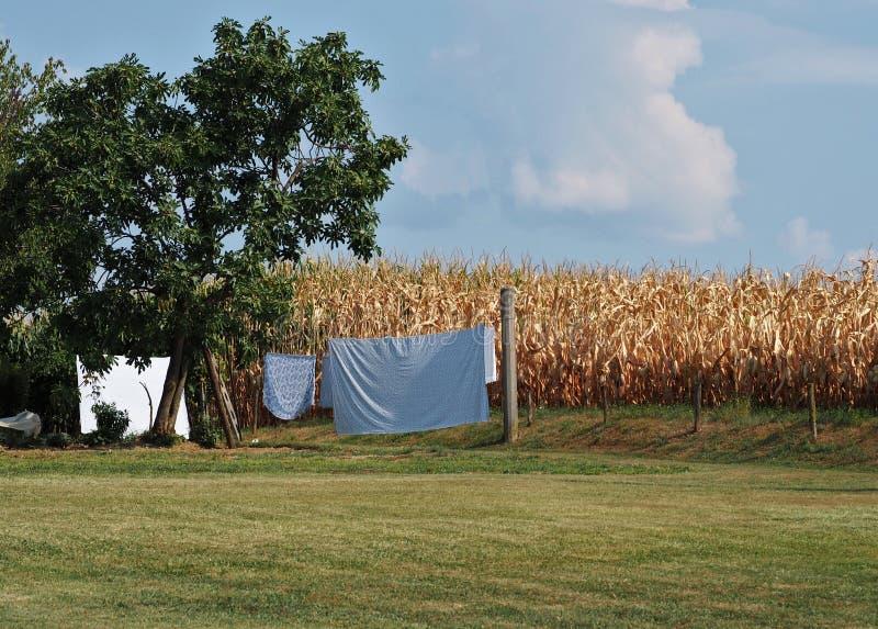 De bladen hingen uit om voor cornfield te drogen Plattelandsachtergrond in het eind van de zomer, met exemplaarruimte stock fotografie