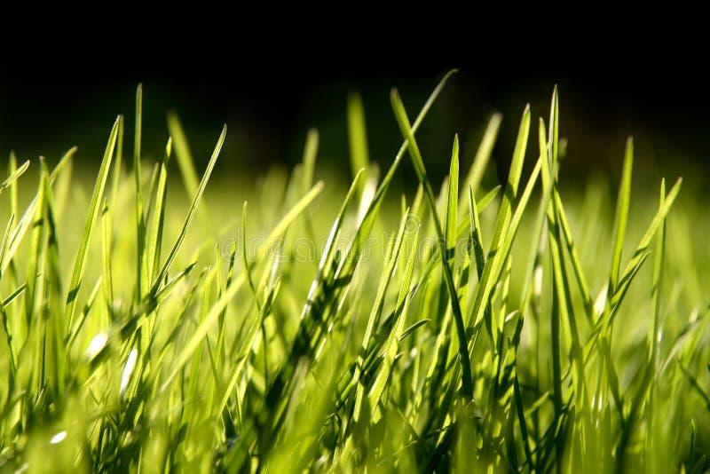 De bladen van het gras royalty-vrije stock fotografie