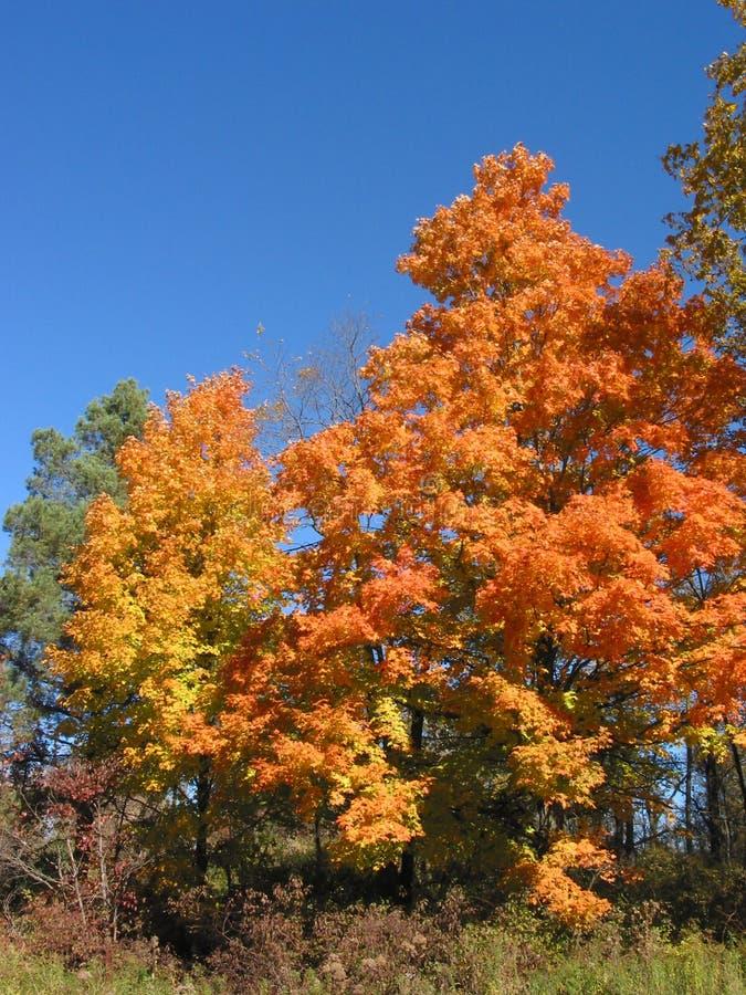 De Bladeren â 04_10_2_032 van de herfst royalty-vrije stock afbeeldingen