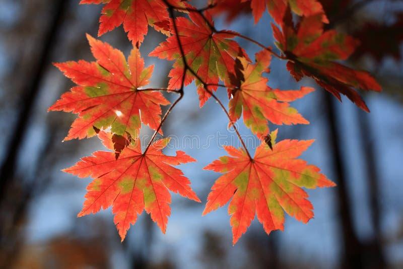 De bladeren stock foto's