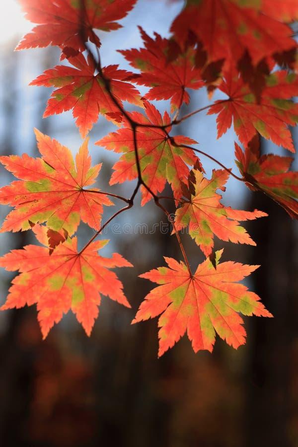 De bladeren royalty-vrije stock afbeeldingen