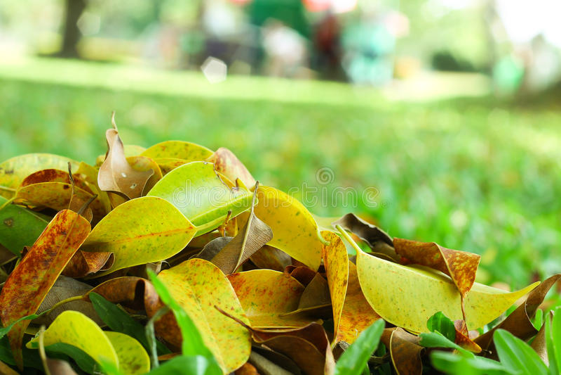 De bladeren in de tuin stock fotografie