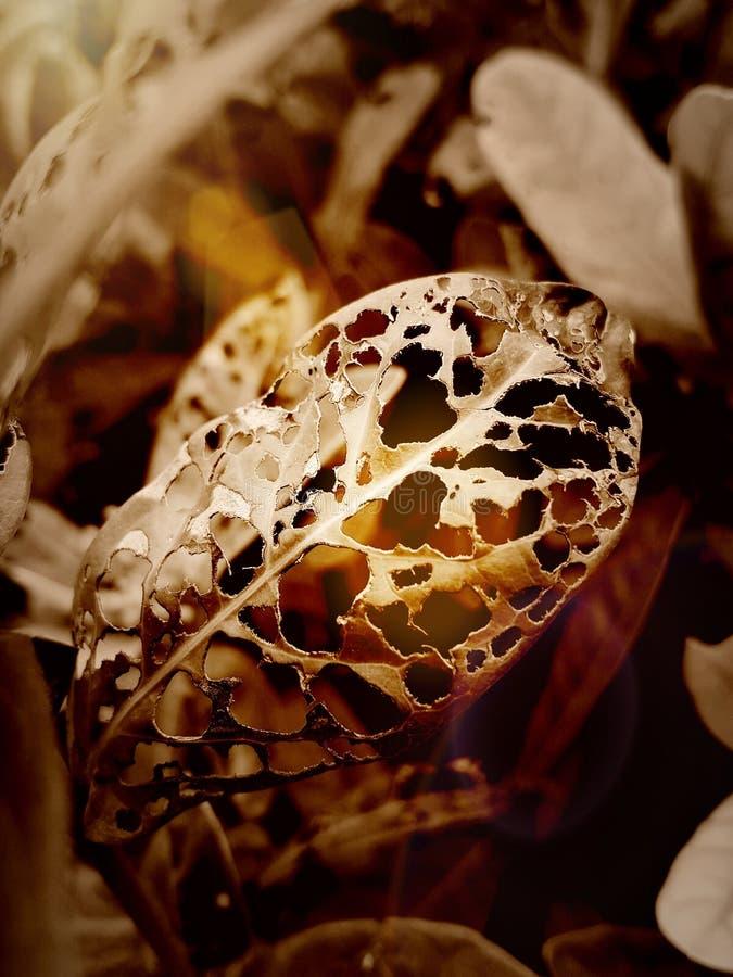 De bladeren die de insecten hebben gegeten royalty-vrije stock foto's
