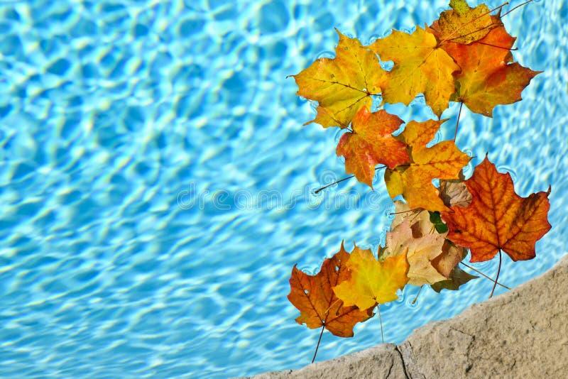 De bladeren die van de daling in pool drijven royalty-vrije stock foto's
