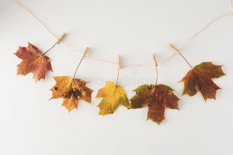 De bladeren die van de val op een clothesline hangen die op witte, exemplaarruimte wordt geïsoleerd Platte leuningsachtergrond royalty-vrije stock afbeeldingen