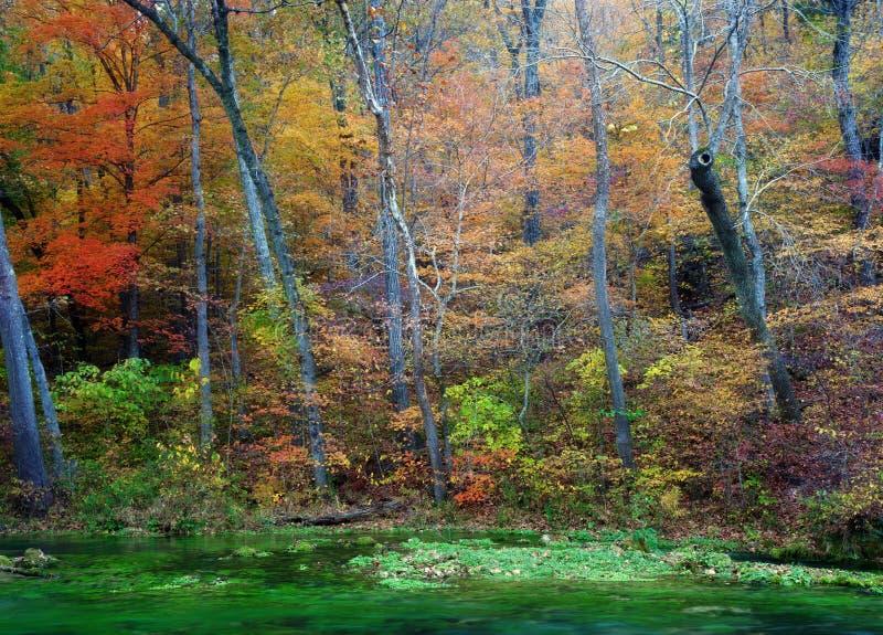 De bladeren en de bomen van de herfst op rivier royalty-vrije stock foto
