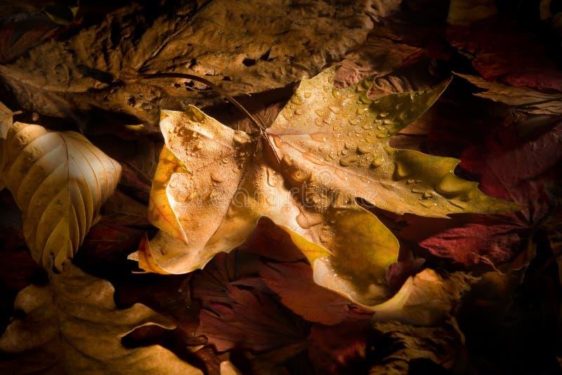 De bladeren en de dauw van de herfst royalty-vrije stock afbeelding