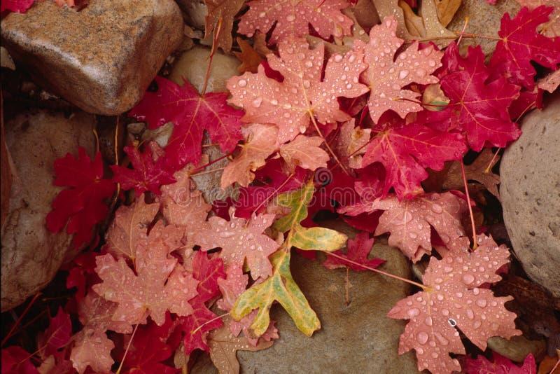 De bladeren en de rotsen van de herfst stock fotografie