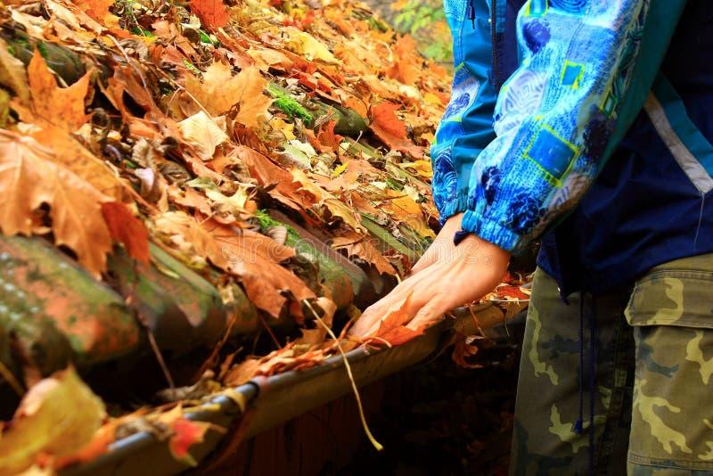 De bladeren op het dak stock foto