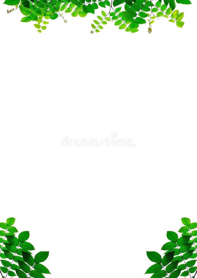 De bladeren sluiten omhoog op achtergrond stock foto