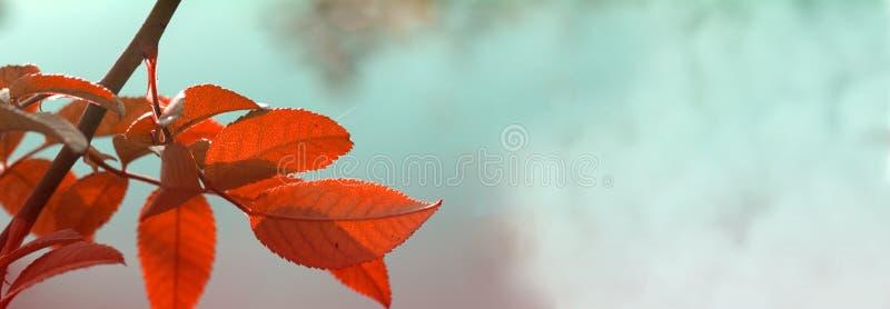De bladeren van Autumn Yellow van de Webbanner natuurlijke achtergrond voor Webverbod royalty-vrije stock fotografie