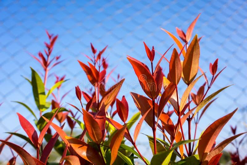 De bladeren van Christina stock foto