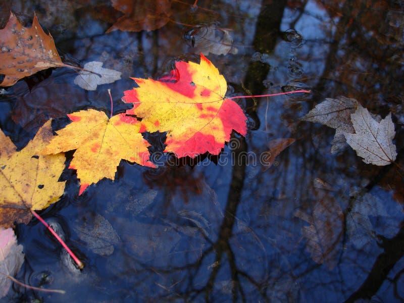De bladeren van Colorfull op waterspiegel stock afbeeldingen