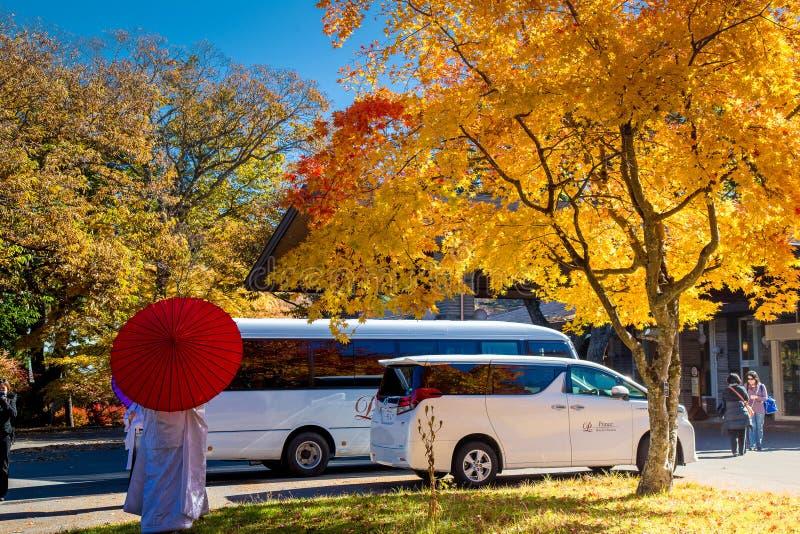 De bladeren van de dalingsherfst op bomen in Japan royalty-vrije stock fotografie