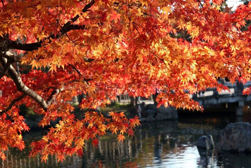 De bladeren van de daling over water. stock foto's