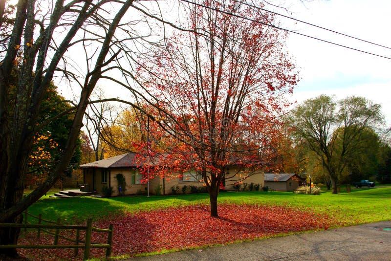 De bladeren van de de herfstboom stock afbeeldingen
