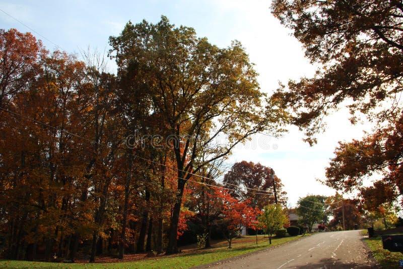 De bladeren van de de herfstboom stock fotografie