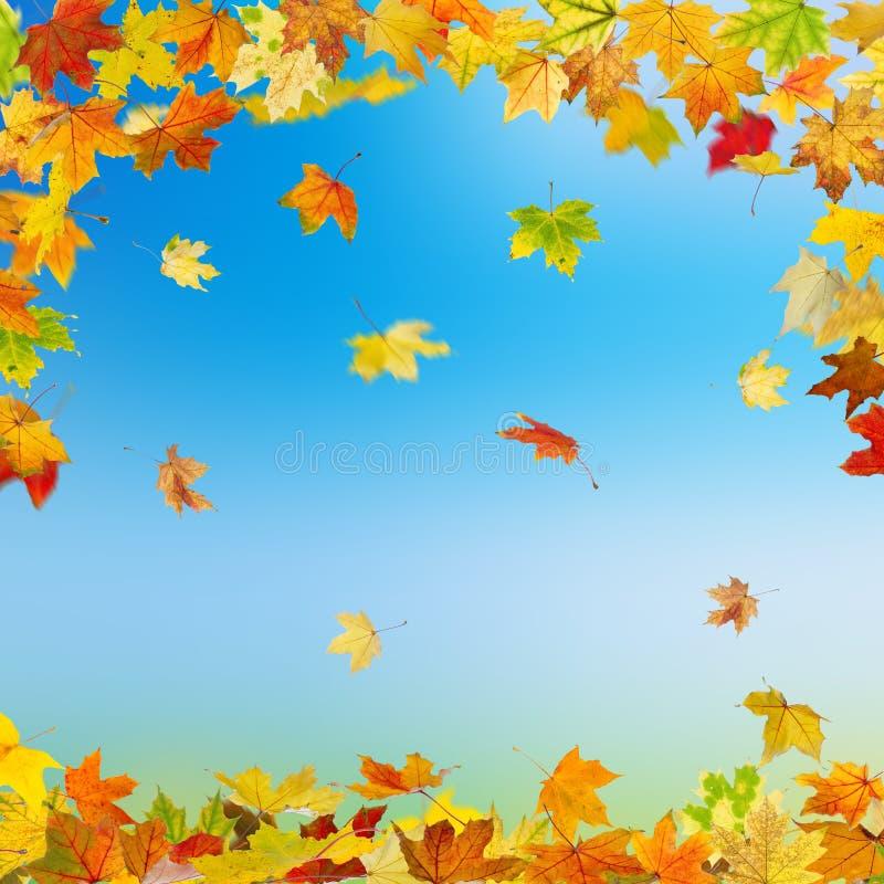 De bladeren van de de herfstesdoorn vector illustratie