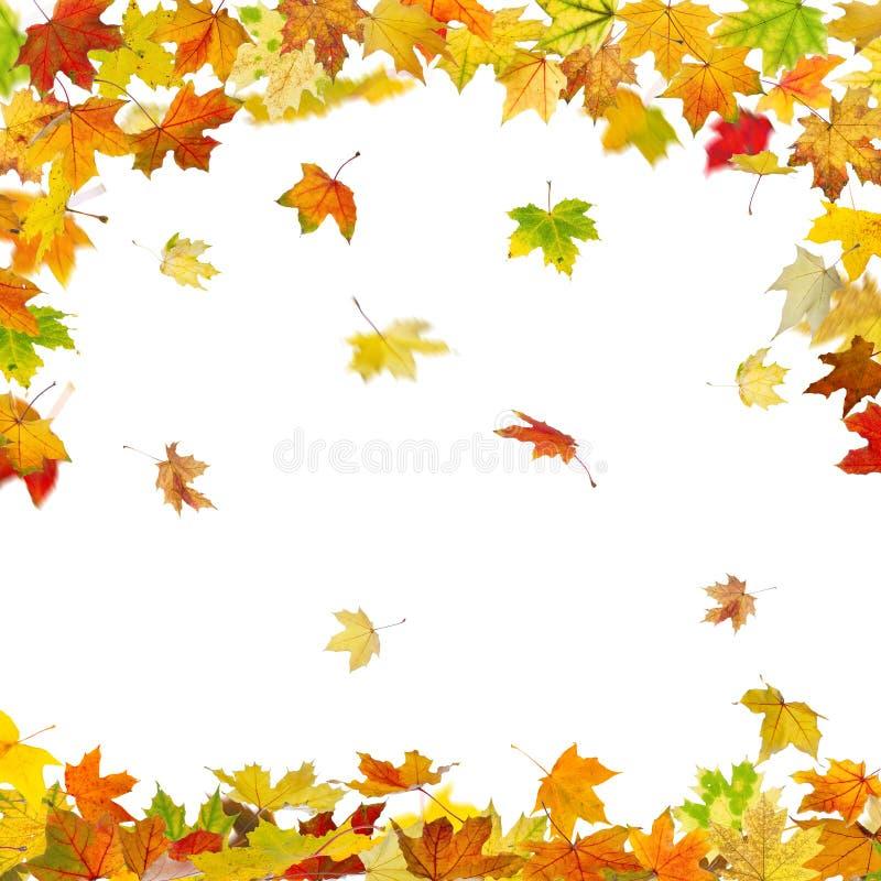 De bladeren van de de herfstesdoorn royalty-vrije illustratie