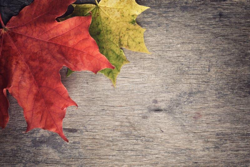 De bladeren van de de herfstesdoorn op houten lijst royalty-vrije stock foto's