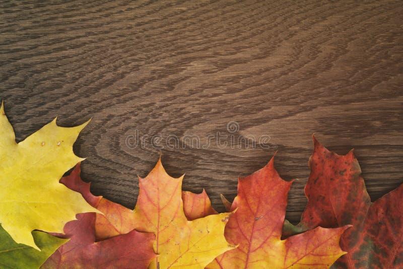 De bladeren van de de herfstesdoorn op houten lijst stock foto
