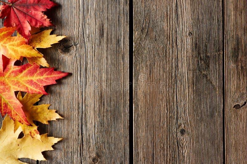 De bladeren van de de herfstesdoorn over houten achtergrond stock fotografie