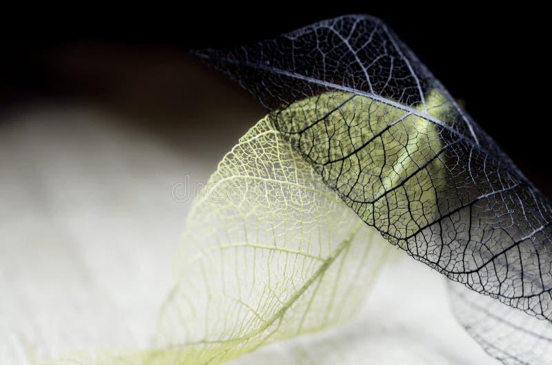 De bladeren van de de herfstfantasie royalty-vrije stock foto