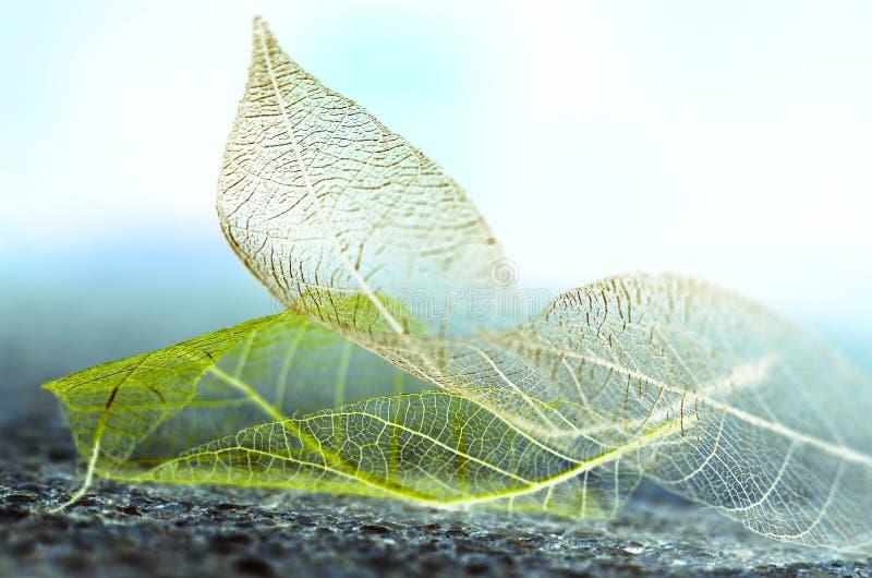 De bladeren van de de herfstfantasie stock afbeelding