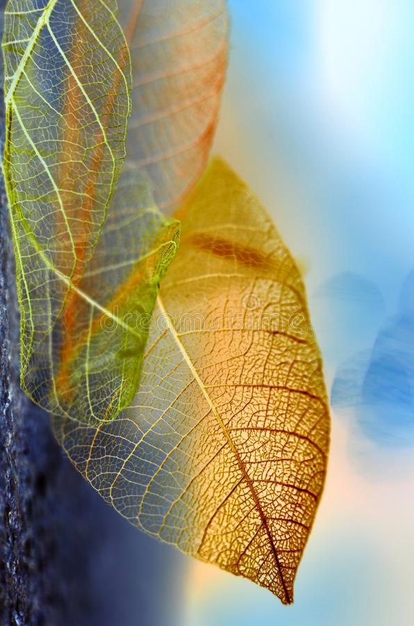 De bladeren van de de herfstfantasie stock afbeeldingen