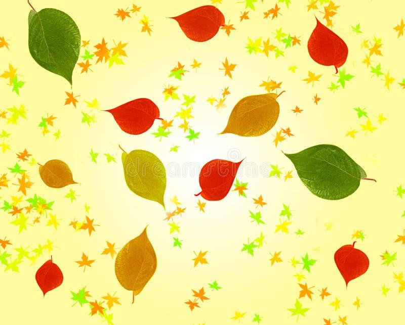 Download De bladeren van de herfst stock foto. Afbeelding bestaande uit autumn - 10779164