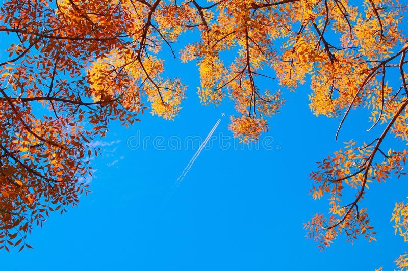 De bladeren van de herfst stock fotografie