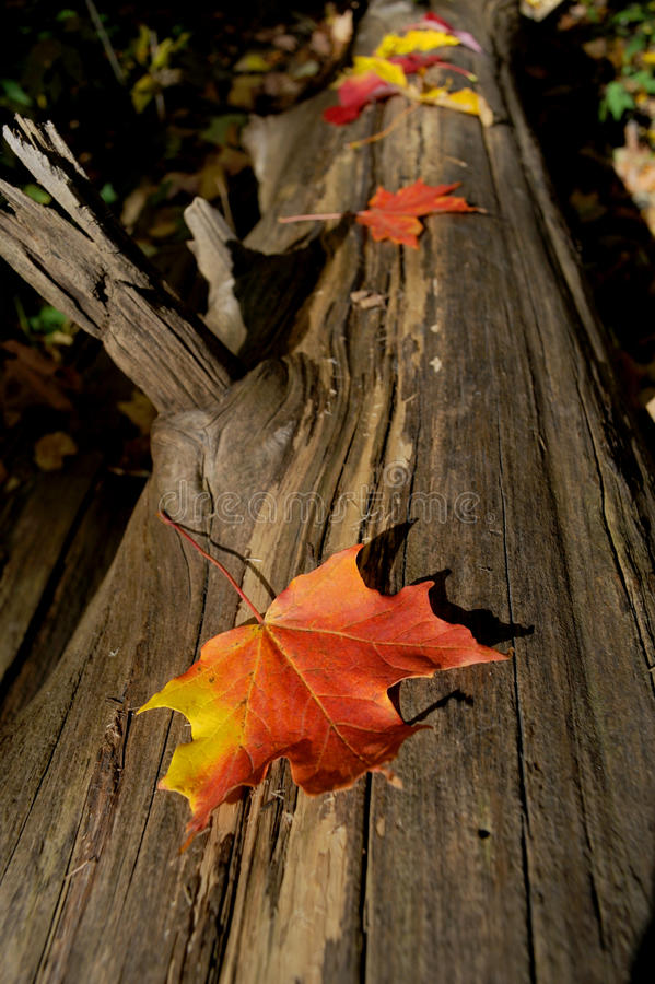 De Bladeren van de herfst royalty-vrije stock fotografie