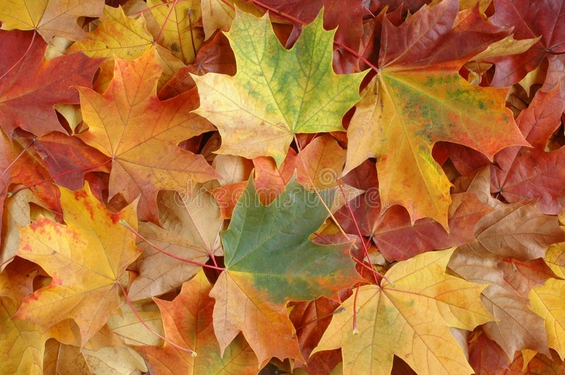 Download De Bladeren van de herfst stock afbeelding. Afbeelding bestaande uit patroon - 29257