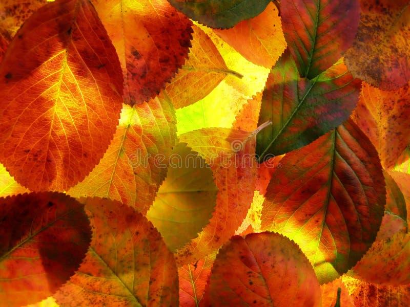 De bladeren van de herfst stock foto