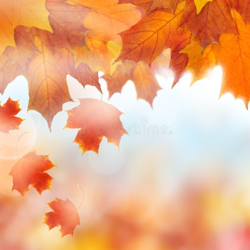 De bladeren van de herfst, achtergrond royalty-vrije stock afbeeldingen
