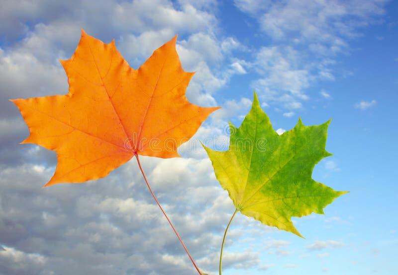 De bladeren van de herfst en blauwe hemel stock afbeelding